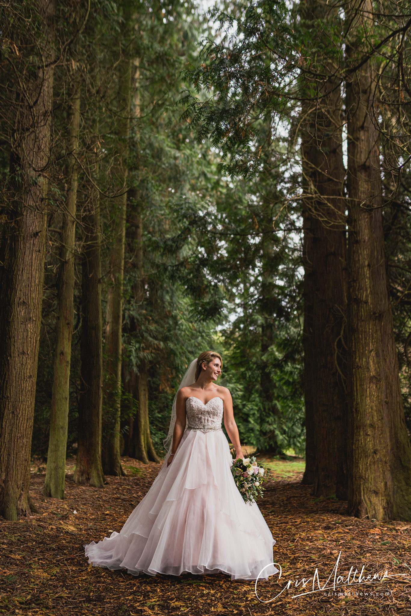 Trees at Hawkstone Hall Wedding Photography